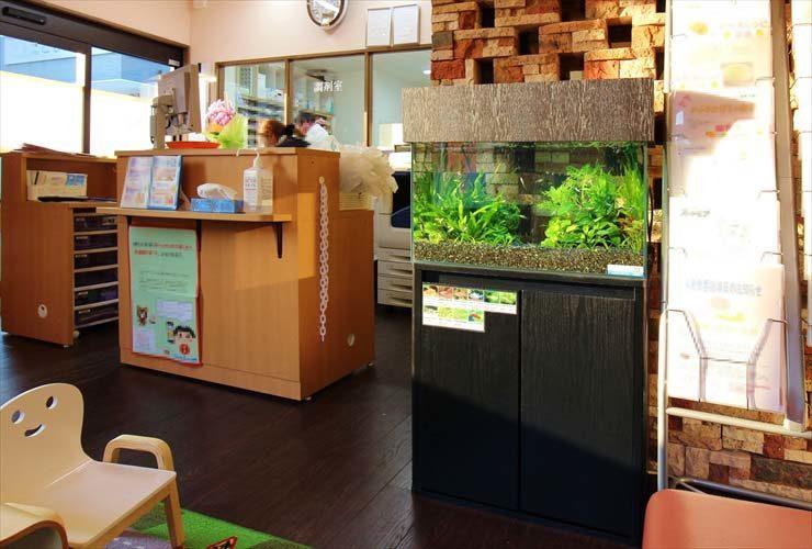 薬局の待合室(受付横)に設置 60cm淡水魚水槽事例 水槽画像1