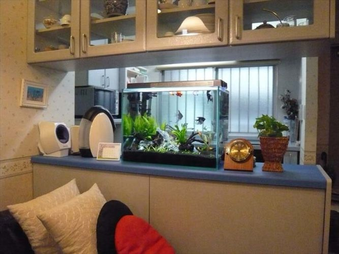 都内 企業様  60cm淡水魚水槽  設置事例 メイン画像
