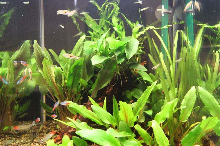 個人宅のリビング スタイリッシュな30cm淡水魚水槽 レンタル事例 メイン画像
