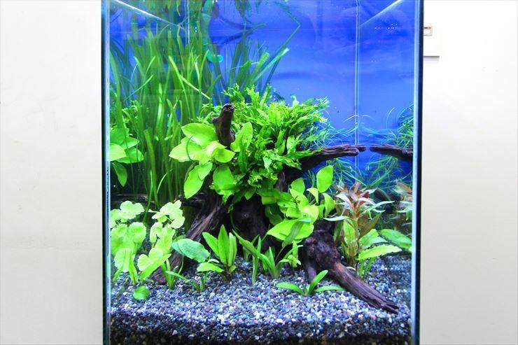 お魚がいない?!オフィスに設置した癒しの水草水槽事例 メイン画像