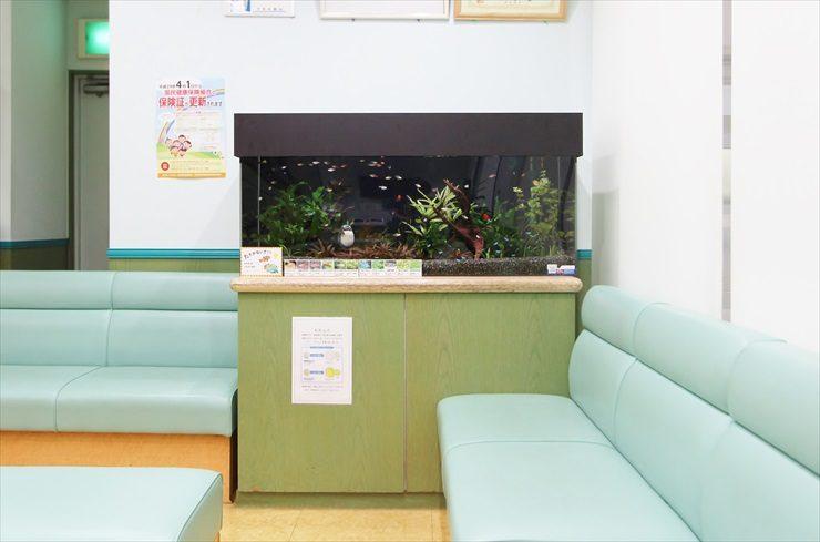 薬局の待合室に設置した幻想的な淡水魚水槽事例 メイン画像