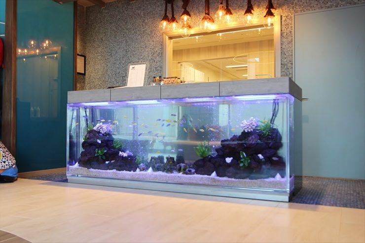 シェラトン・グランデ・トーキョーベイ・ホテル様に設置をした大型シクリッド水槽 メイン画像