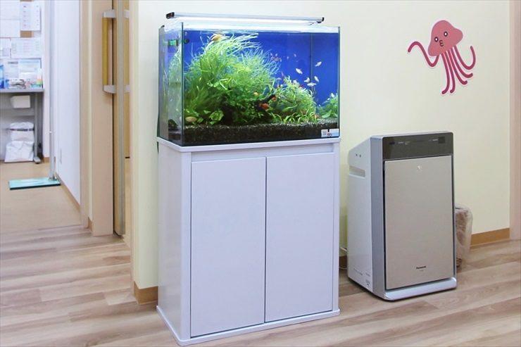 小児科 待合室 アクアリウム(淡水魚水槽)設置事例 メイン画像