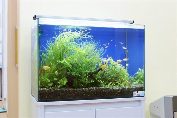 小児科 待合室 アクアリウム(淡水魚水槽)設置事例 水槽画像3