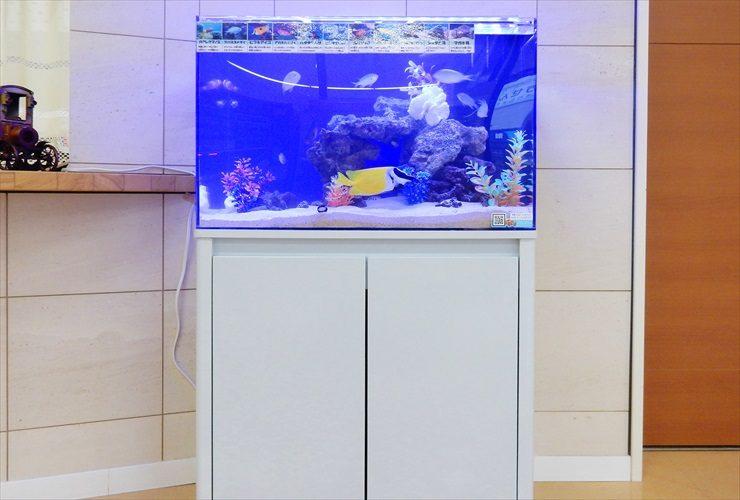病院の受付フロアに設置 アクアリウム(海水魚水槽)設置事例 メイン画像
