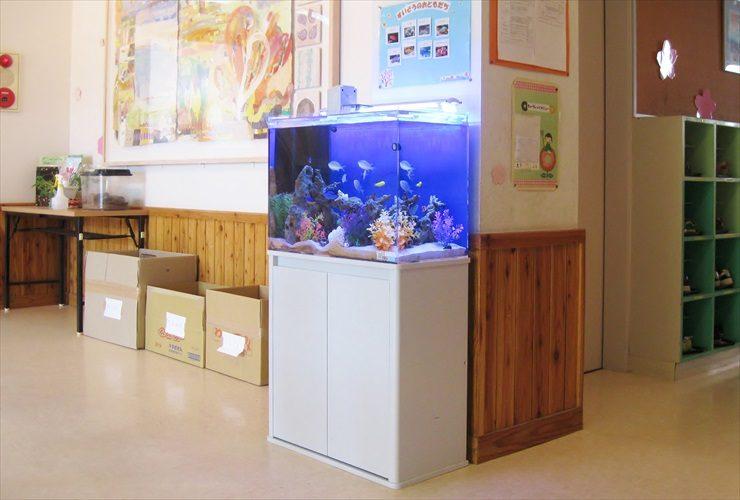 幼稚園 海水魚水槽 設置事例:こどもたちの情操教育に最適 メイン画像