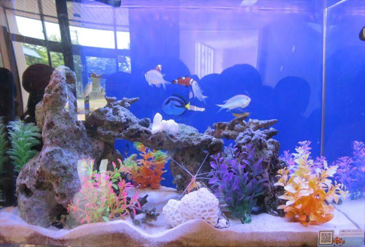 幼稚園 海水魚水槽 設置事例:こどもたちの情操教育に最適 水槽画像2