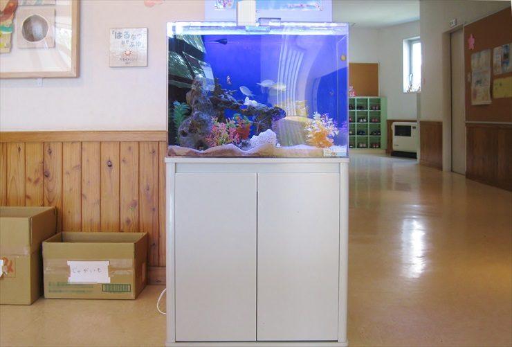 幼稚園 海水魚水槽 設置事例:こどもたちの情操教育に最適 水槽画像3