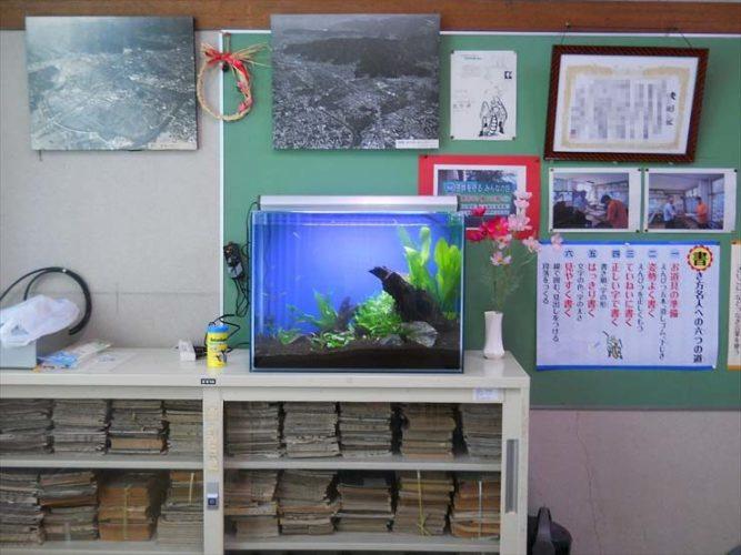 静岡県 校長室様  60cm淡水魚水槽  設置事例 メイン画像