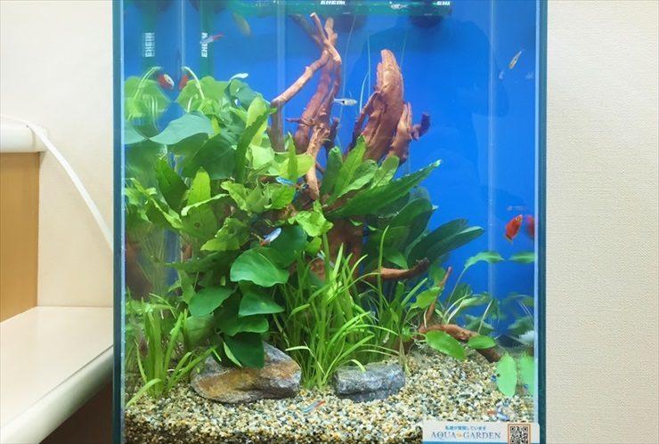 クリニックの待合室に設置 淡水魚水槽(お試し水槽)の事例 水槽画像1