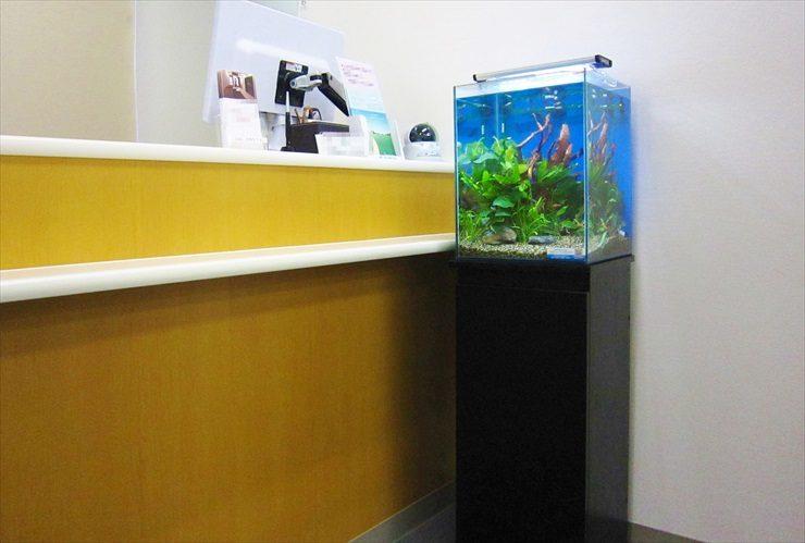 クリニックの待合室に設置 淡水魚水槽(お試し水槽)の事例 水槽画像2