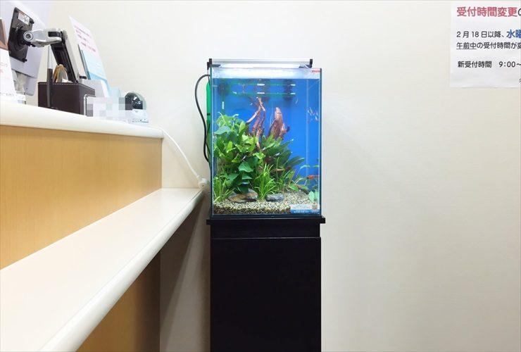 クリニックの待合室に設置 淡水魚水槽(お試し水槽)の事例 水槽画像3