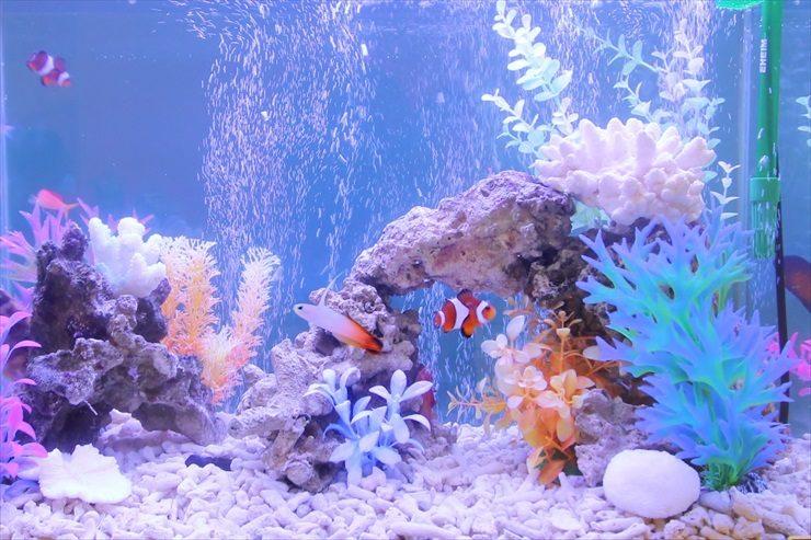 撮影スタジオに設置 海水魚水槽(短期レンタル)の事例 メイン画像