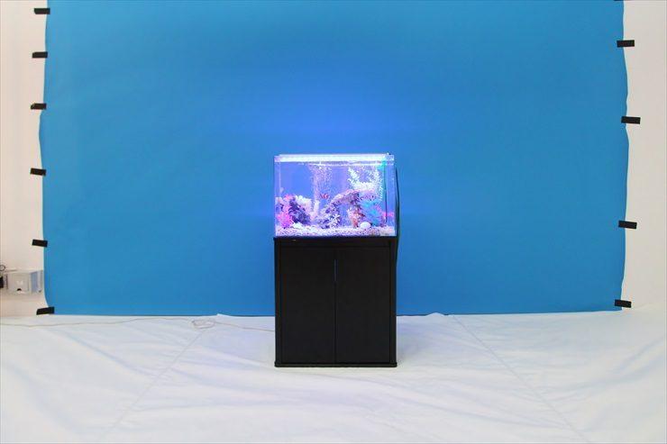 撮影スタジオに設置 海水魚水槽(短期レンタル)の事例 水槽画像2