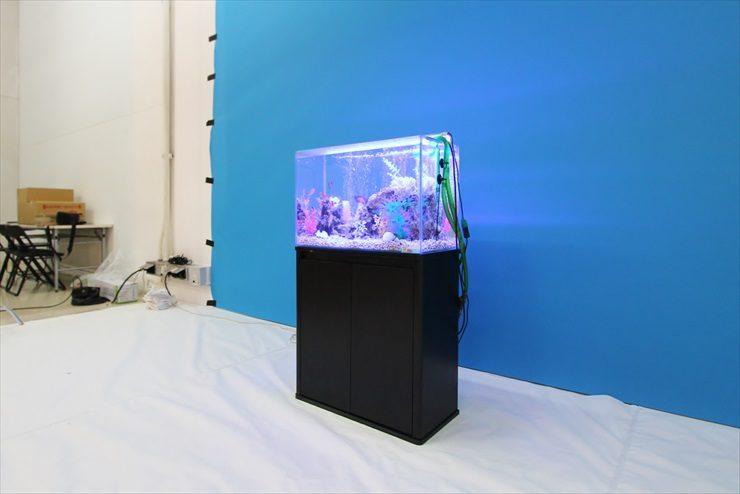 撮影スタジオに設置 海水魚水槽(短期レンタル)の事例 水槽画像3