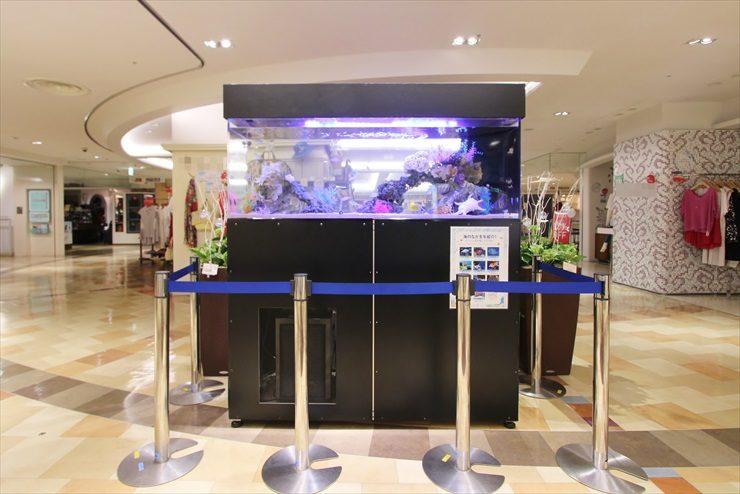 百貨店イベントに設置 海水魚水槽(短期レンタル)の事例 水槽画像1