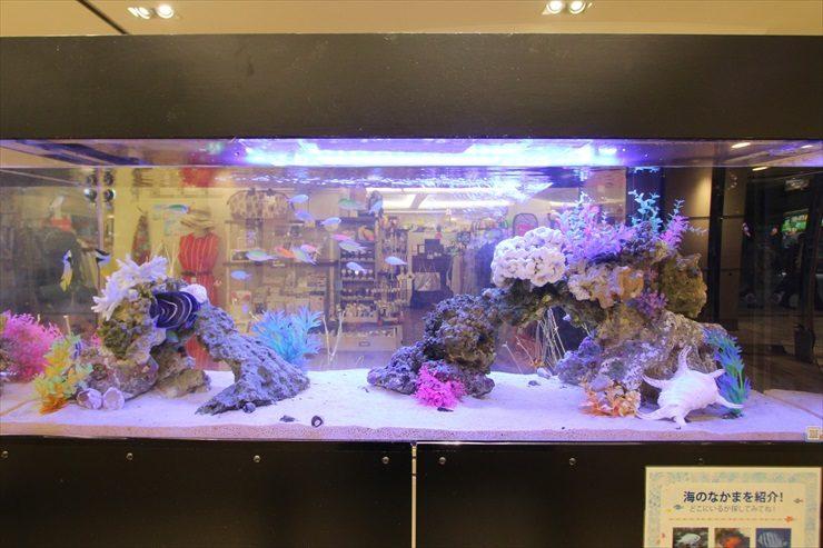 百貨店イベントに設置 海水魚水槽(短期レンタル)の事例 水槽画像2
