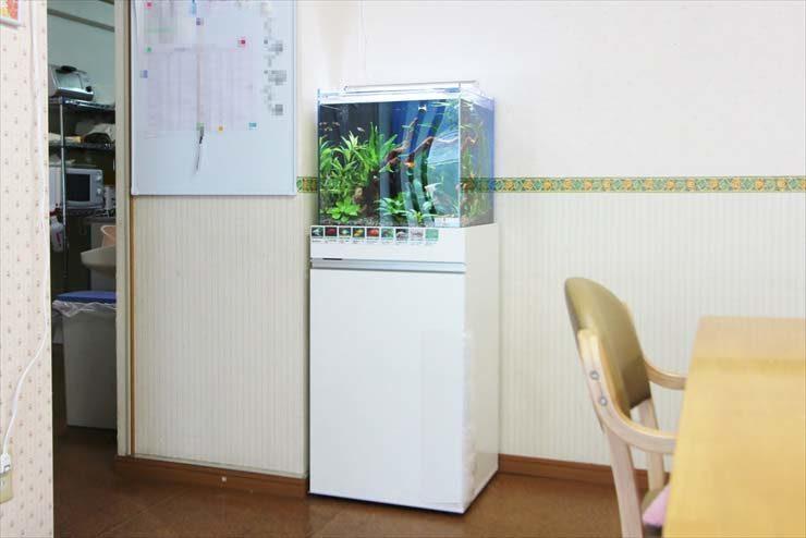 板橋区 住宅型有料老人ホームに設置 アクアリウム(45cm淡水魚水槽)の事例