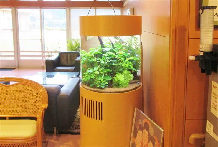 介護付有料老人ホームに設置 円柱アクアリウム(淡水魚水槽)の事例 水槽画像1