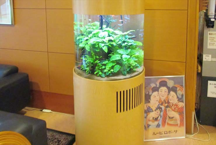 介護付有料老人ホームに設置 円柱アクアリウム(淡水魚水槽)の事例 水槽画像3