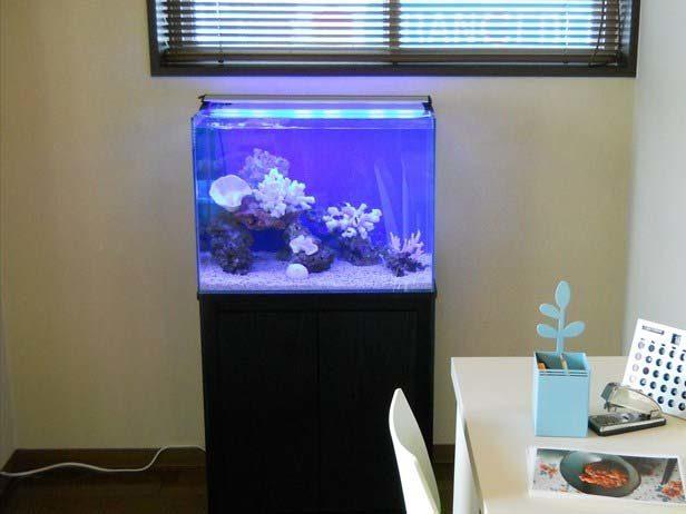 都内 撮影スタジオ様  60cm海水魚水槽  設置事例 メイン画像