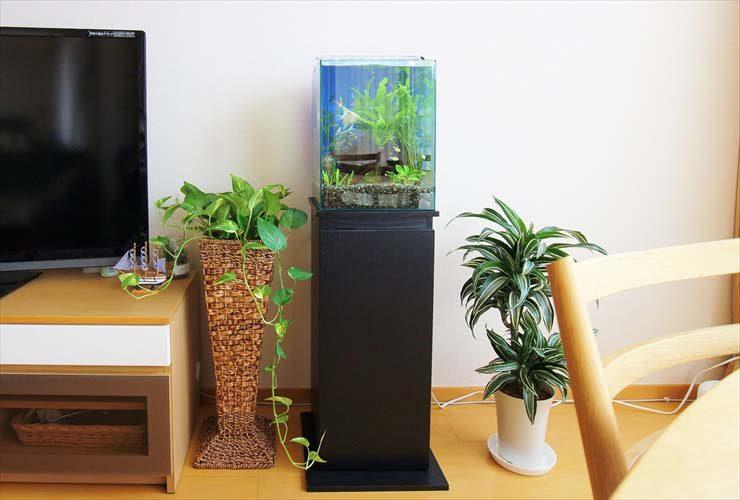 ご自宅のリビングに設置 淡水アクアリウム(エンゼルフィッシュ)の事例 メイン画像