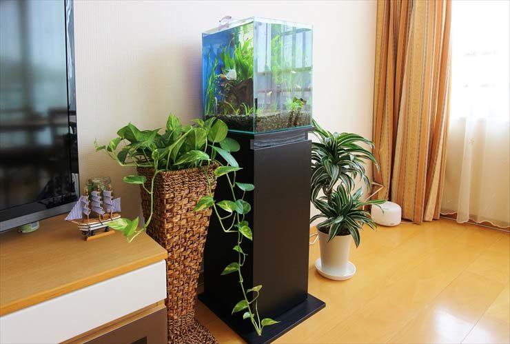 ご自宅のリビングに設置 淡水アクアリウム(エンゼルフィッシュ)の事例 水槽画像3