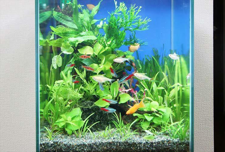 世田谷区 個人宅のリビングに設置 水草アクアリウム(30cm淡水魚水槽)の事例 メイン画像