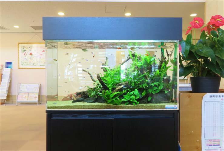 福祉施設の受付フロアに設置 水草アクアリウム(90cm淡水魚水槽)の事例 水槽画像1
