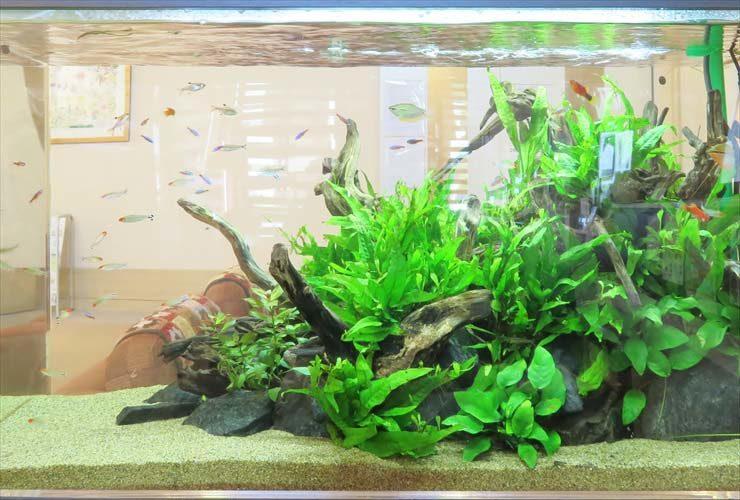 福祉施設の受付フロアに設置 水草アクアリウム(90cm淡水魚水槽)の事例 水槽画像2