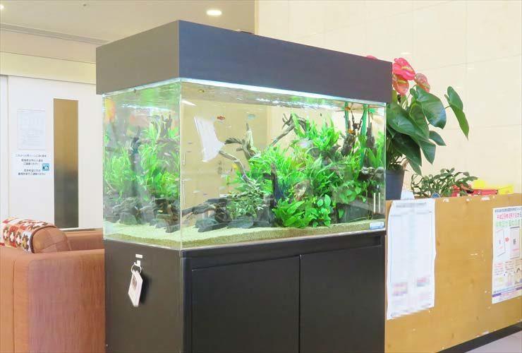 福祉施設の受付フロアに設置 水草アクアリウム(90cm淡水魚水槽)の事例 水槽画像3
