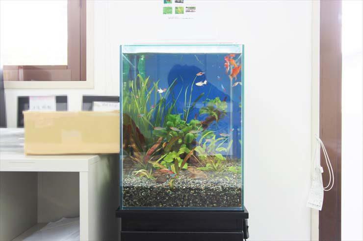 豊島区東池袋 オフィスに設置 水草淡水アクアリウム(30cm小型サイズ)の事例 水槽画像1