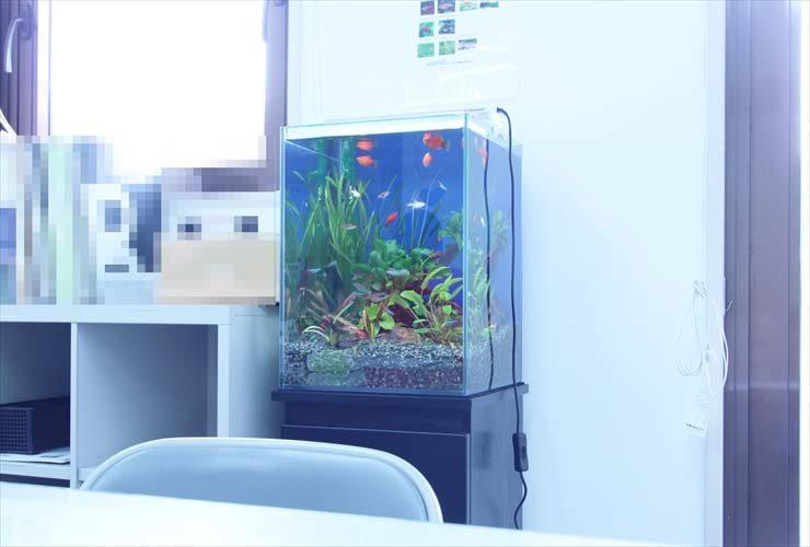 豊島区東池袋 オフィスに設置 水草淡水アクアリウム(30cm小型サイズ)の事例 水槽画像3