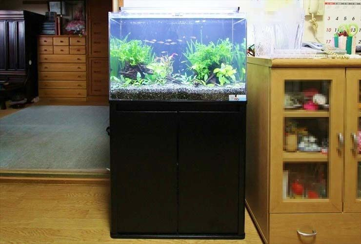 神奈川県 個人宅のリビングに設置 淡水アクアリウム(60cm水槽)の事例 メイン画像