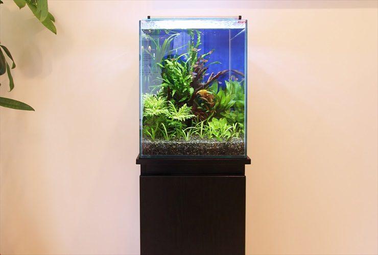 産婦人科の待合室に設置 お試し水槽(30cm淡水魚水槽)の事例 水槽画像1
