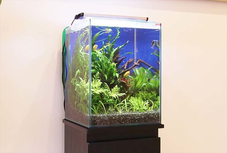 産婦人科の待合室に設置 お試し水槽(30cm淡水魚水槽)の事例 水槽画像2