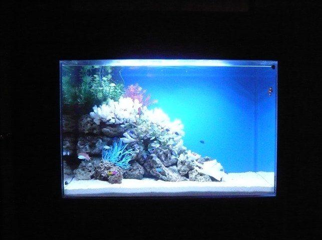 東京都豊島区 飲食店様  90cm海水魚水槽  設置事例 メイン画像