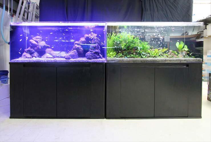 淡水アクアリウム(120cm水槽) 水槽レイアウトを日々勉強中 水槽画像1