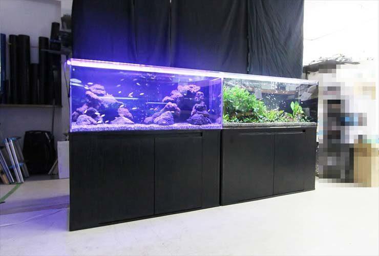 淡水アクアリウム(120cm水槽) 水槽レイアウトを日々勉強中 水槽画像2