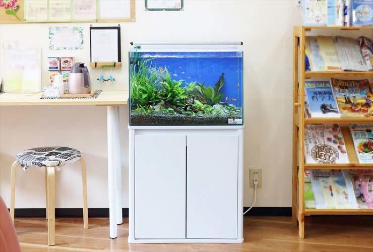 文京区 薬局 待合室の活用で水槽を設置 水槽画像1