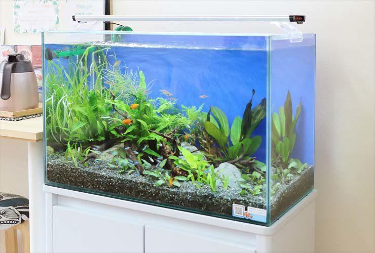 文京区 薬局 待合室の活用で水槽を設置 水槽画像2