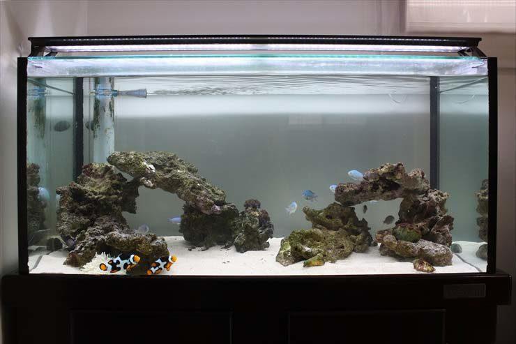 個人宅 海水魚水槽 リニューアル