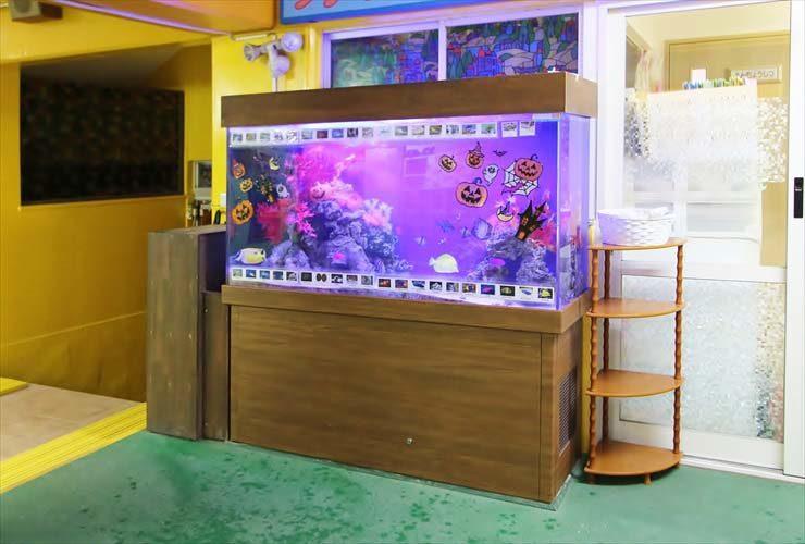 幼稚園 水槽レイアウトをリニューアル ハッピーハロウィン水槽! メイン画像