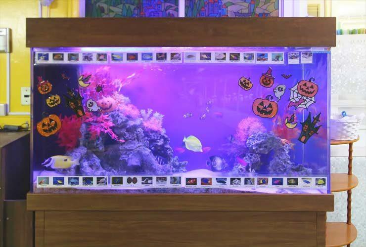 幼稚園 水槽レイアウトをリニューアル ハッピーハロウィン水槽! 水槽画像2