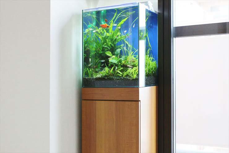 目黒区 個人宅 水槽のお引越し 淡水アクアリウム(30cm)の事例 メイン画像