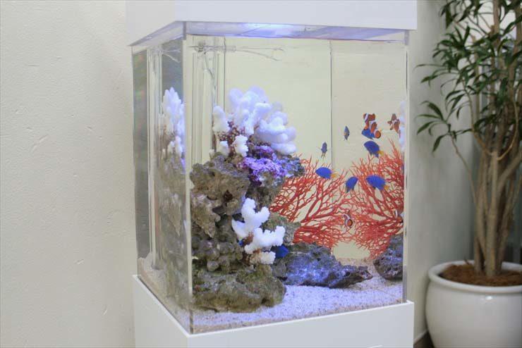 都内 オフィス様  30cm海水魚水槽  設置事例 メイン画像