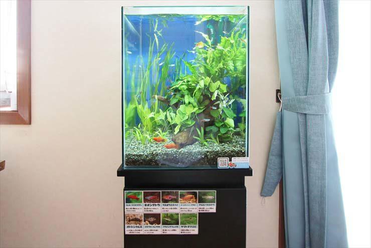 狛江市 個人宅 リビング 30cm淡水魚 お試し水槽設置事例 メイン画像