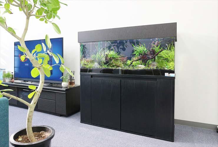 さいたま市 オフィスに設置 120cm淡水アクアリウム 水槽事例 メイン画像