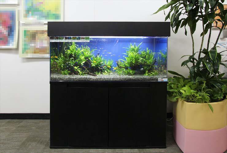 横浜 総合病院に設置 120cm淡水アクアリウム お試し水槽事例 メイン画像