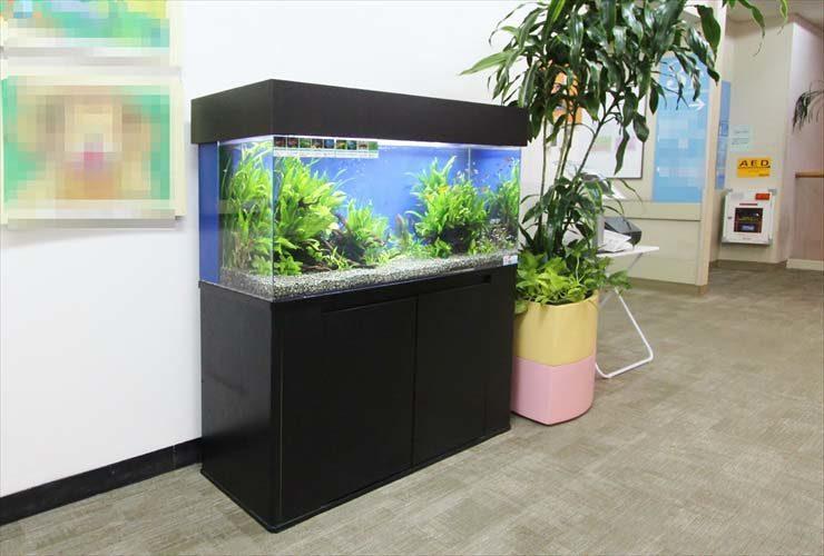 横浜 総合病院に設置 120cm淡水アクアリウム お試し水槽事例 水槽画像3